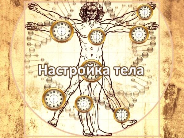 тело механизм