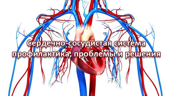 сердечо-сосудистая система - профилактика